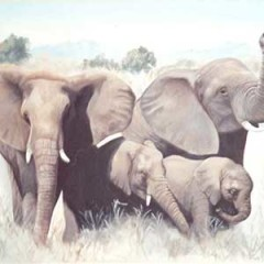 Fine Art Paintings – Elephants