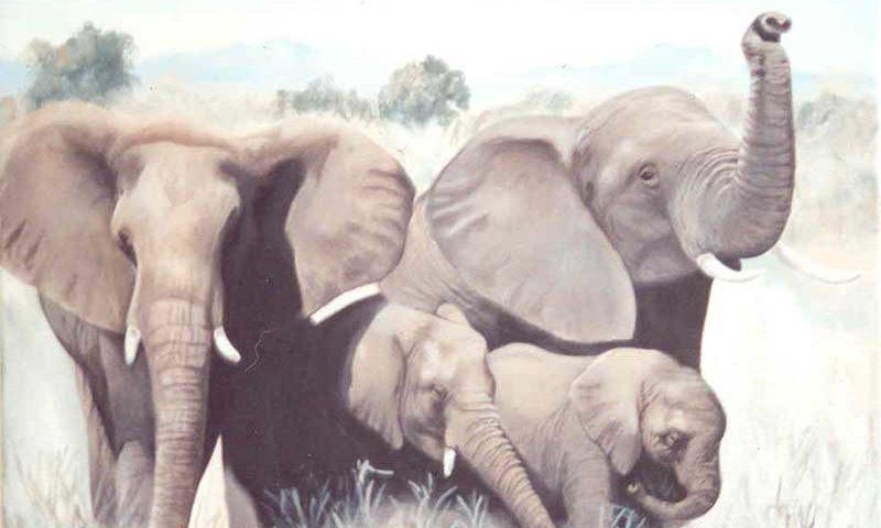 Fine Art Paintings – Elephants